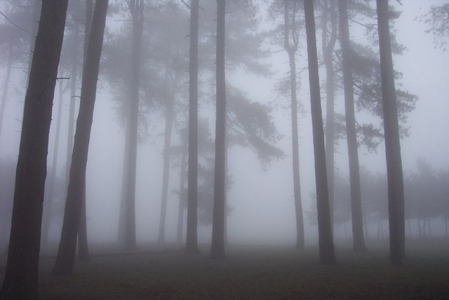 Mist_in_the_trees_on_May_Hill_-_geograph.org.uk_-_278234